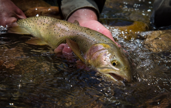 Western Native Trout Initiative